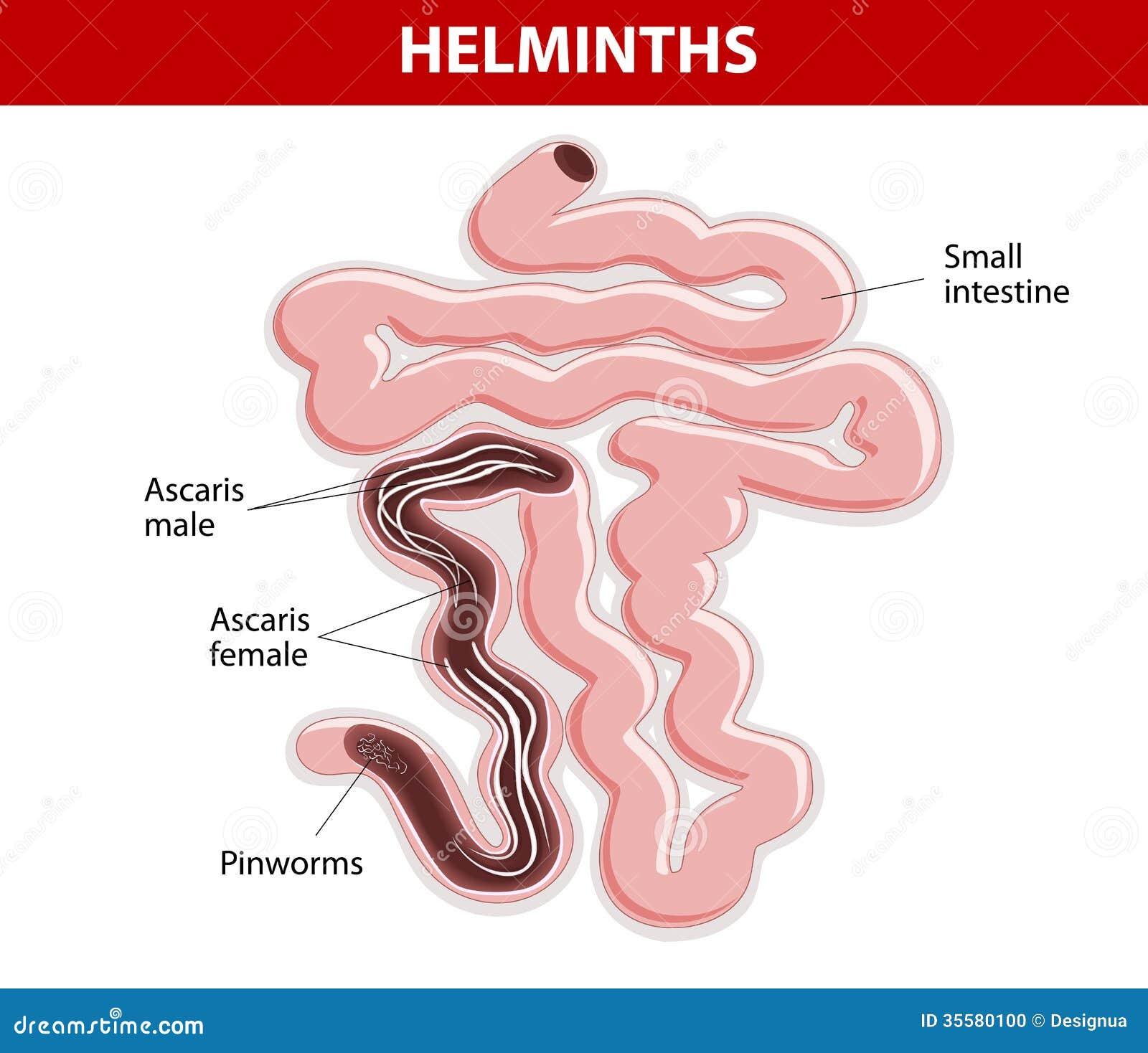 Helminth ouă în fecale ceea ce este - Liposis
