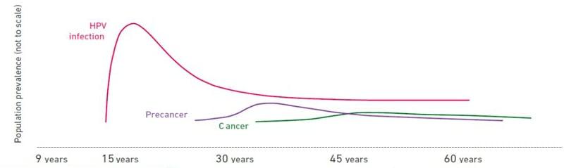 hpv cervical cancer timeline)