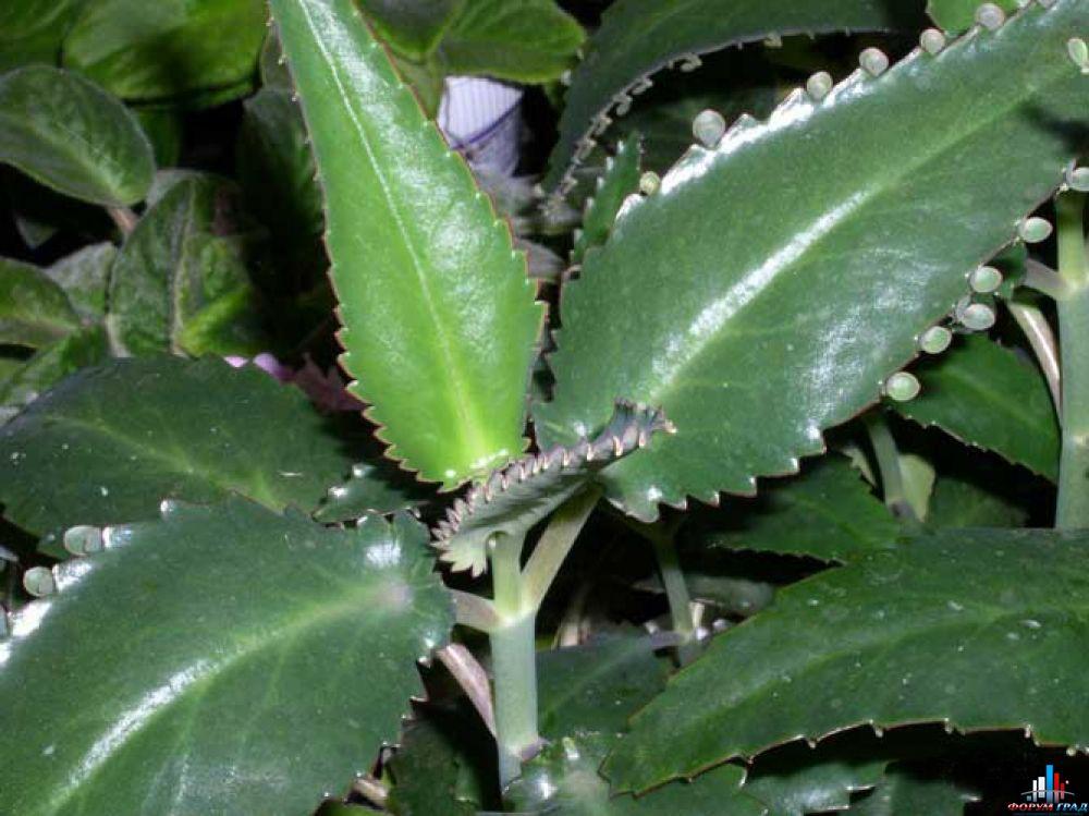 Plantele care vindecă miraculos cancerul într-o zi - Revista Teo