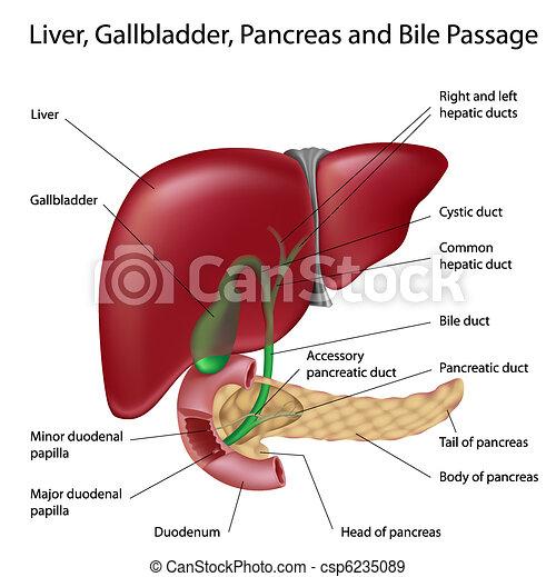 cancer pancreas ges)