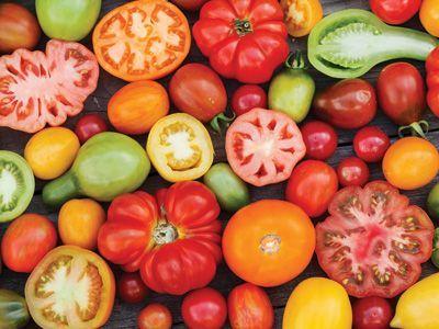 viermi tomate