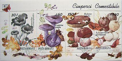 3 ciuperci otravitoare