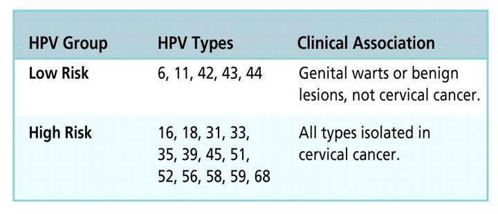 high risk papilloma)