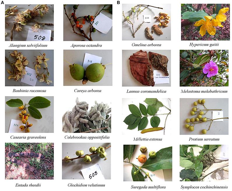 anthelmintic medicinal plant)
