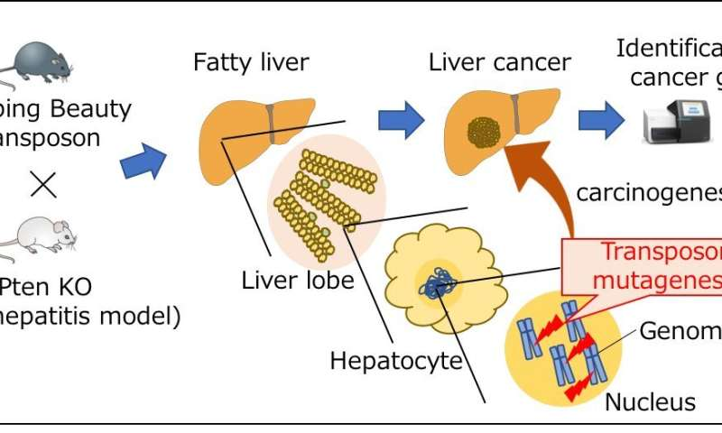 hepatic cancer genes