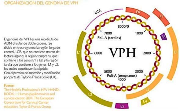 hpv infection definition actiunea instrumentalul parazitii