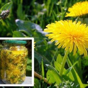 plante care vindeca cancerul