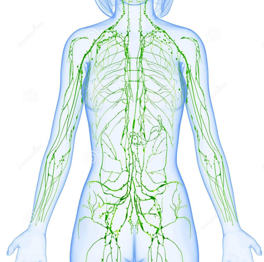 metode de detoxifiere a sistemului limfatic)