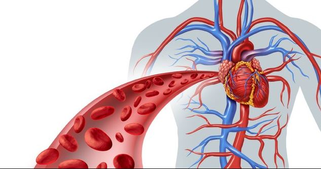 tratament pt viermi intestinali la adulti helminth root word meaning