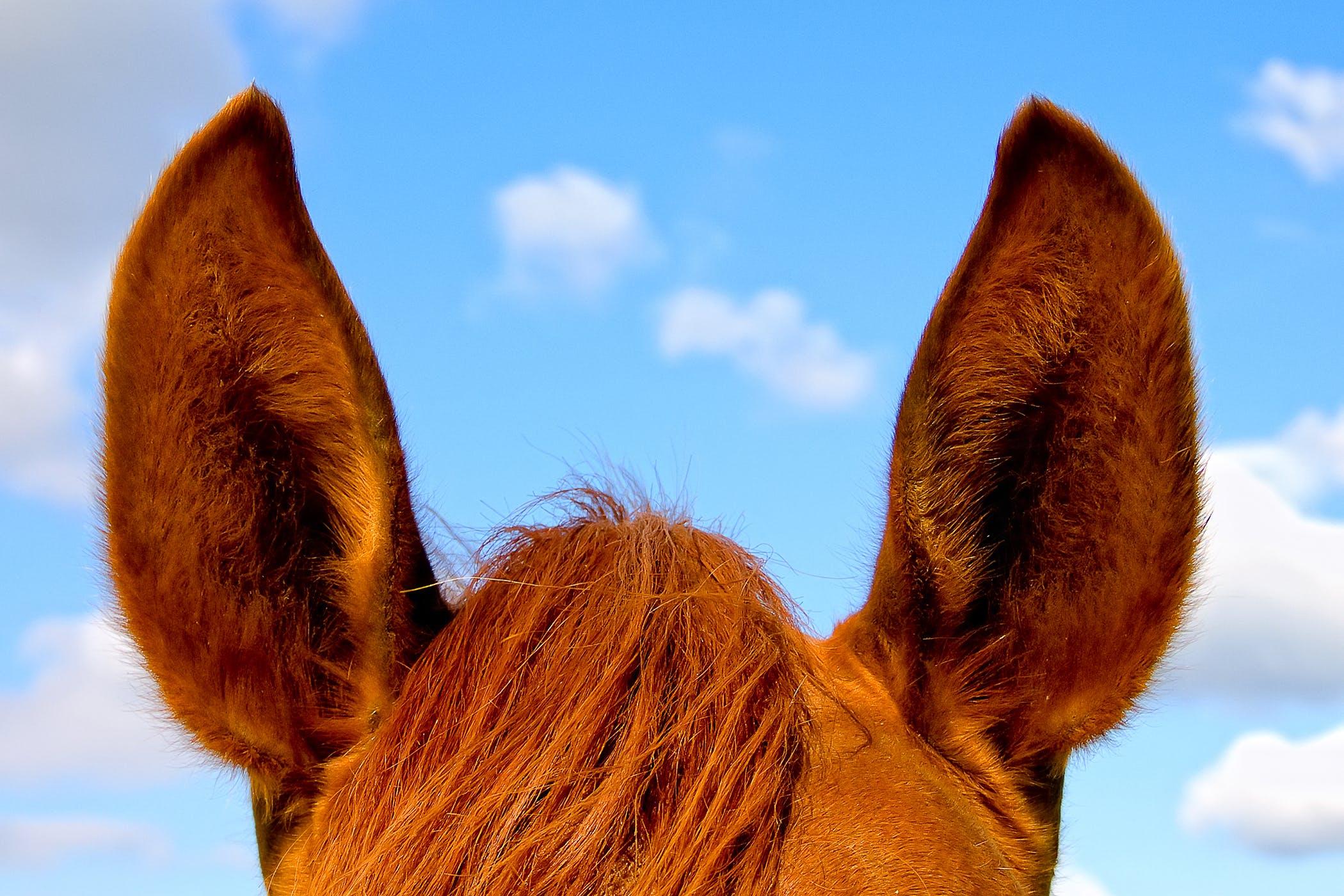 papillomas of ear
