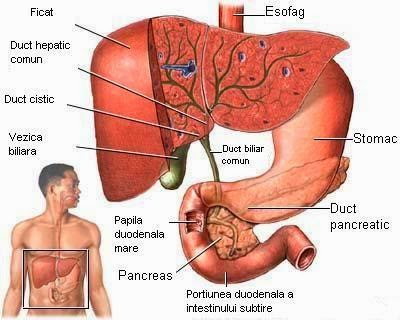 parazitii si ficatul