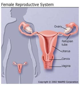 uterine cancer bladder symptoms