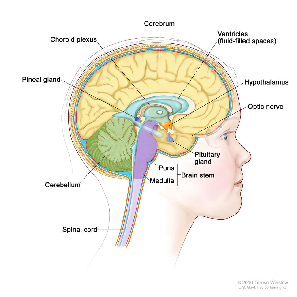 hpv brain cancer