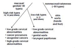 vaccination papillomavirus effets secondaires papiloma humano articulos