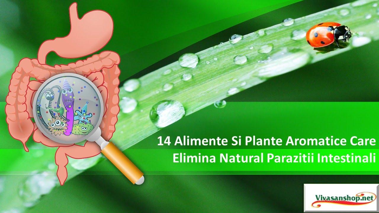 paraziti intestinali in engleza)