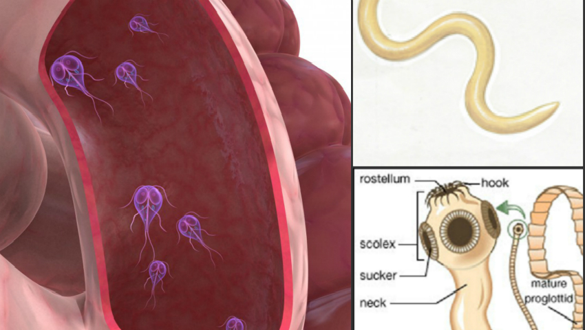 paraziti in sange la copii
