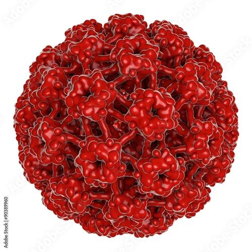 what is human papillomavirus type 16)