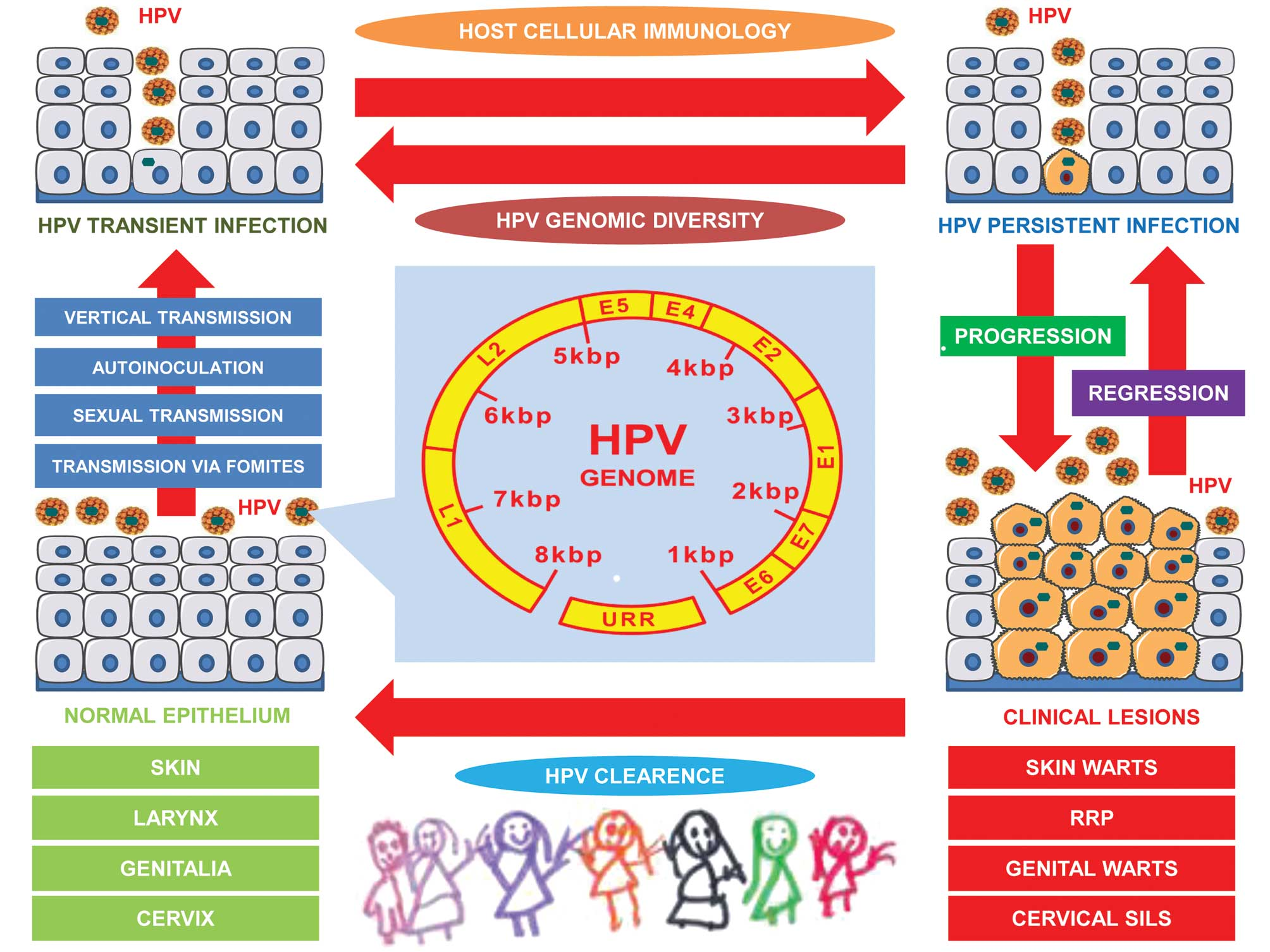 human papillomavirus in infants transmission prevalence and persistence)