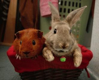 Paraziți de iepuri