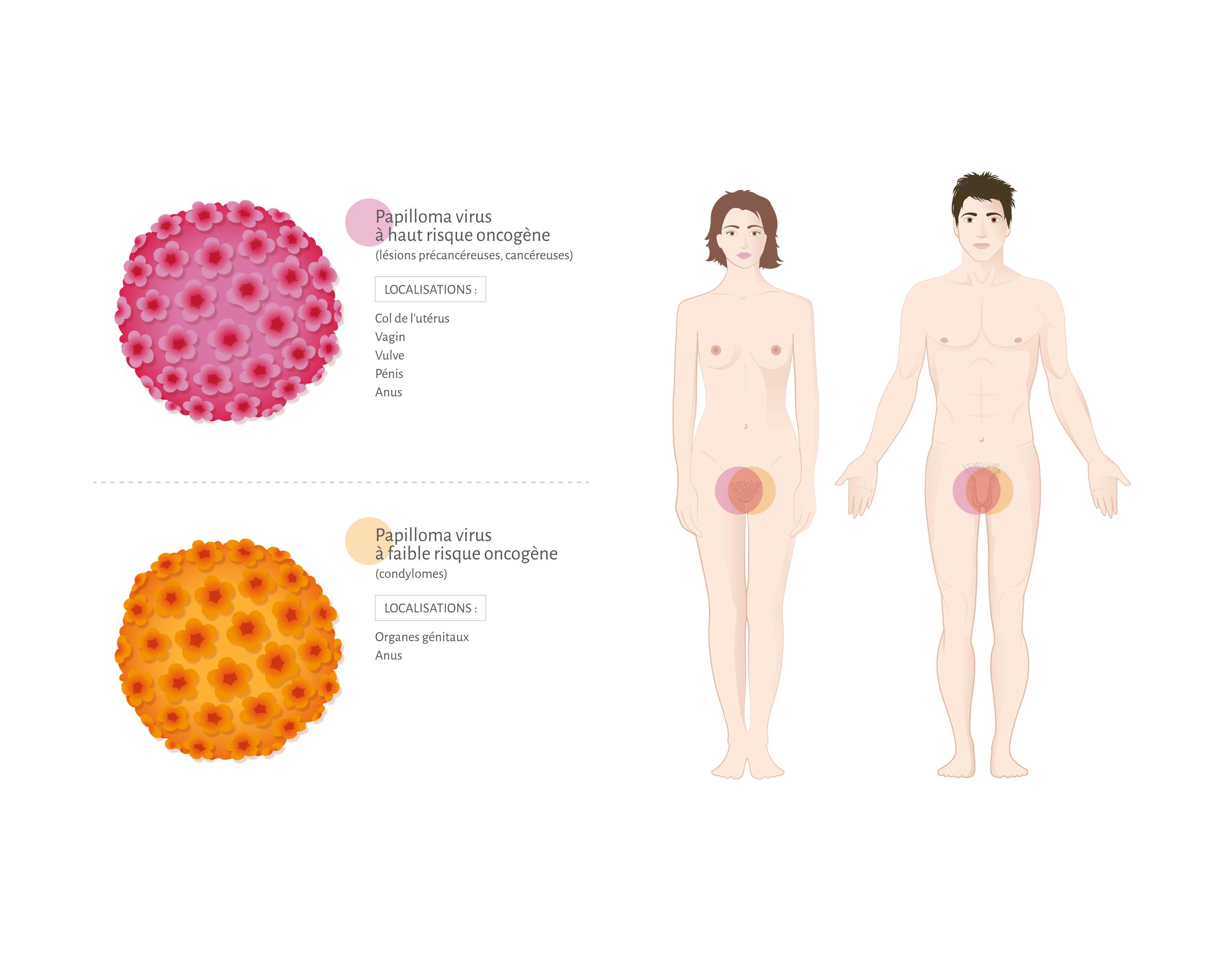 human papillomavirus kit