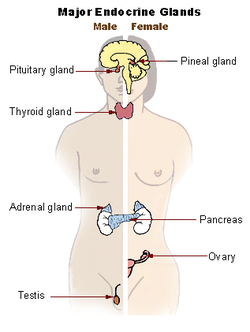 The Endocrine System at a Glance - Ben Greenstein, Diana F. Wood - Google Cărți