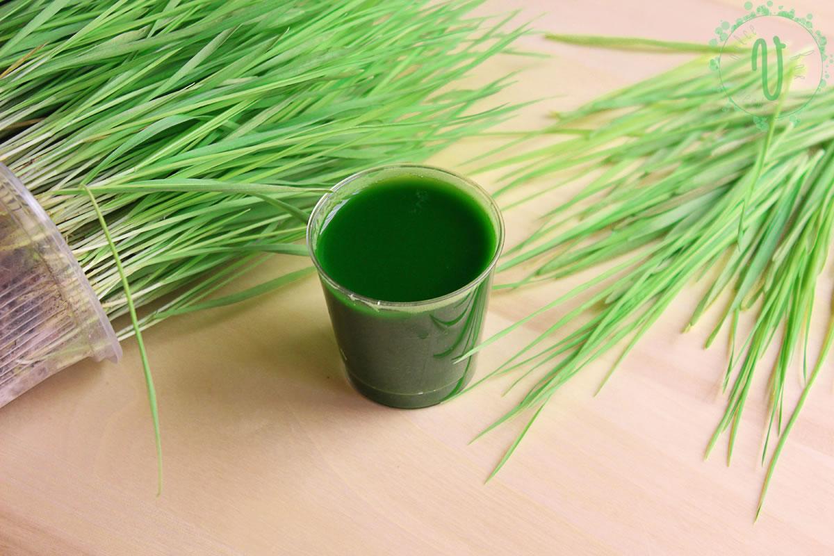 50 de motive pentru a bea in fiecare zi suc din iarba de grau | evenimente-corporate.ro