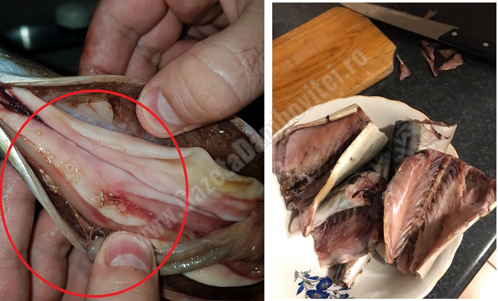 Atenție la ce cumpărați! Pește cu viermi la Moreni, pește alterat la Târgoviște – FOTO