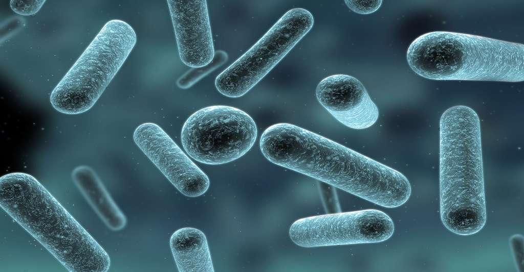bacterie yaourt)