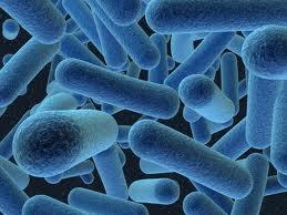 bacterii bune si rele)