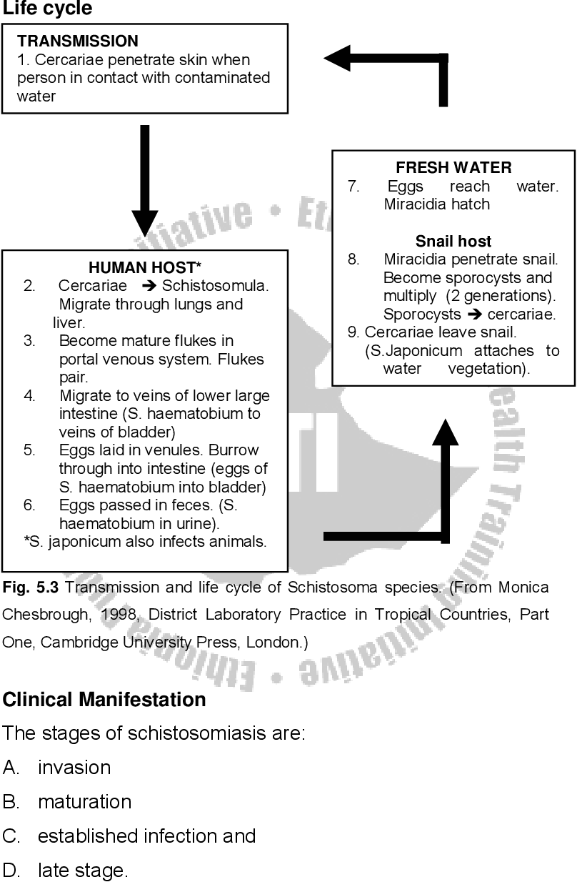 is schistosomiasis a communicable disease)