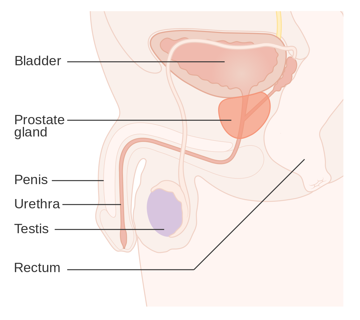 testicular cancer urine test)