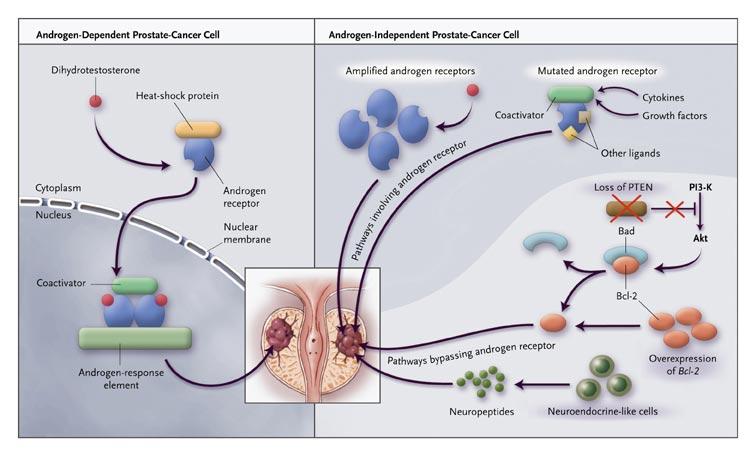 cancer hormonal treatment