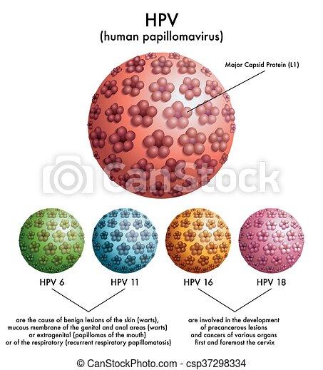 human papilloma virus (hpv) i