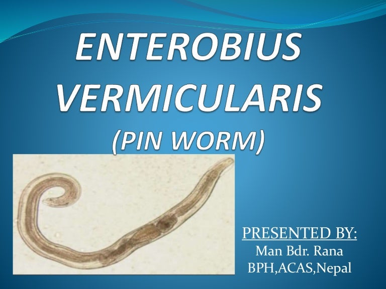 enterobius vermicularis in brain)