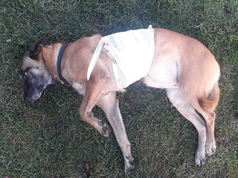 anemie u psa diskuze respiratie urat mirositoare de la ficat