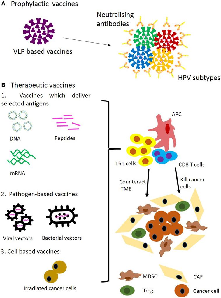 virus hpv in gat