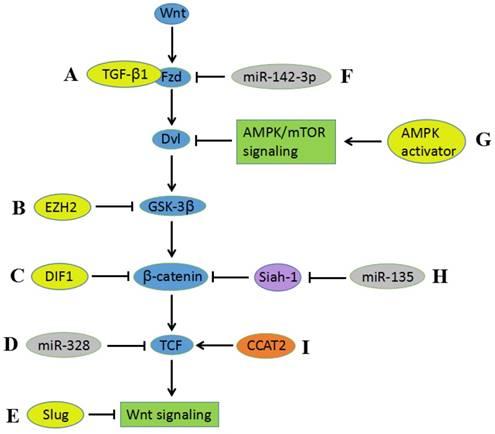 hpv cancer pathway testicular cancer or epididymis