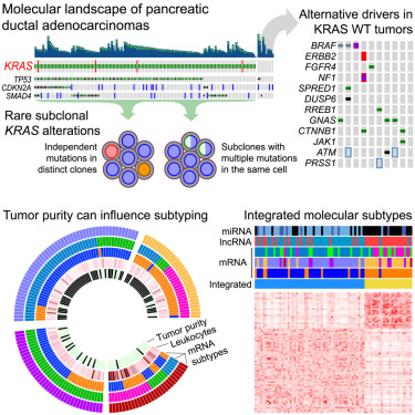 pancreatic cancer genetic heterogeneity