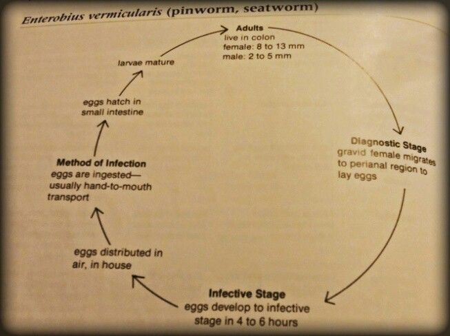 enterobius vermicularis in kenya)