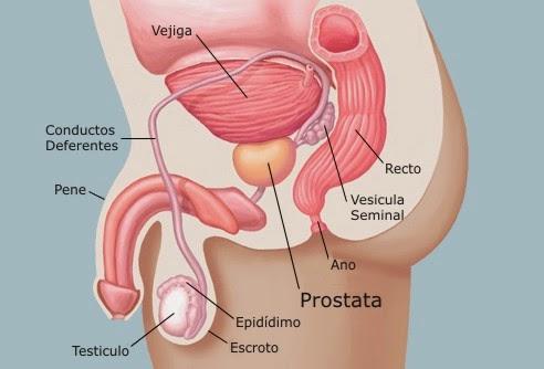 Prostata Cancer La Nueva Medicina Germana Conferencista Miguel Angel Lopez Mp4 MP3 Free Download