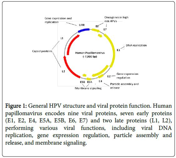 hpv vírus a zwangerschap-on