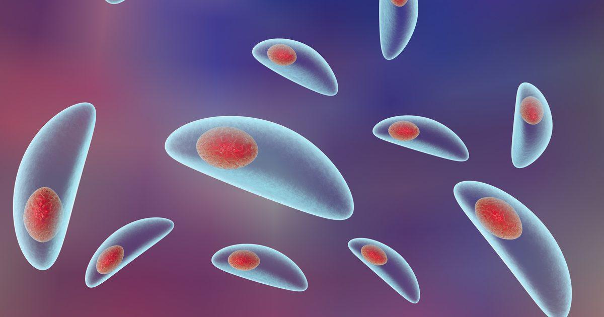 toxoplasma gondii tratament
