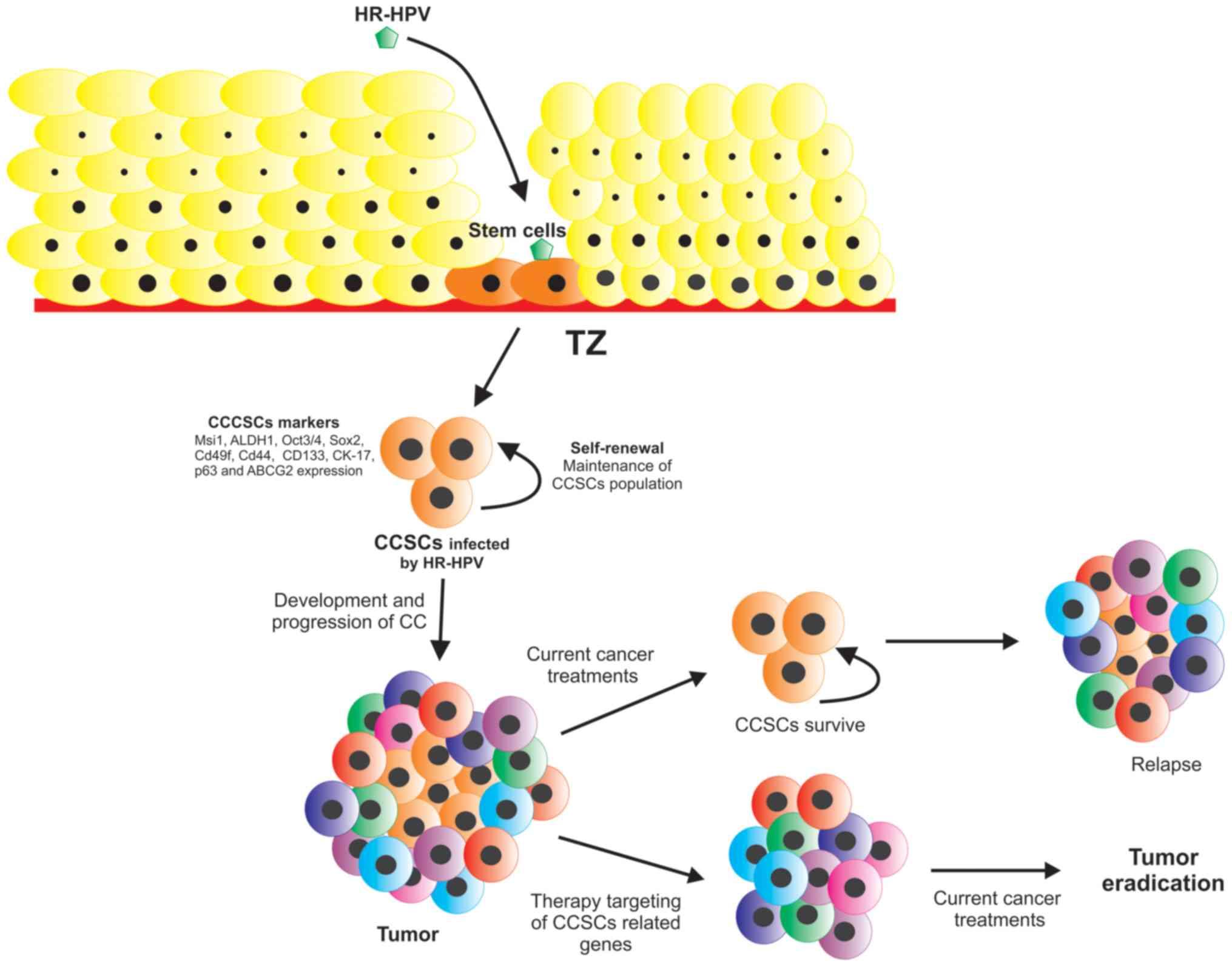 hpv cancer gene)