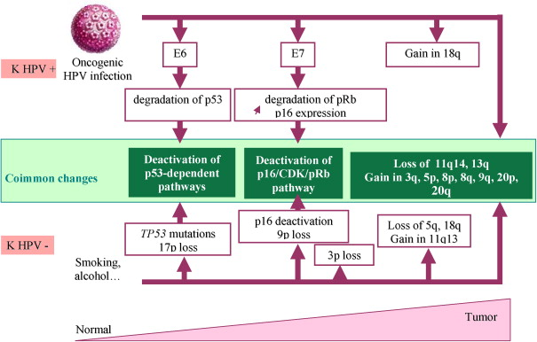 hpv induced head and neck cancer