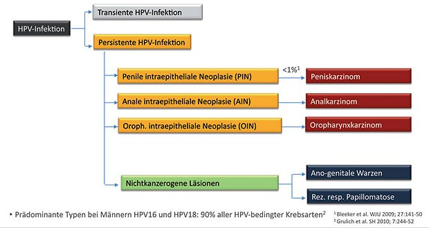 hpv virus mann impfung)