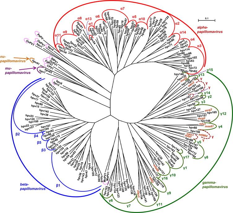 human papillomavirus taxonomy)
