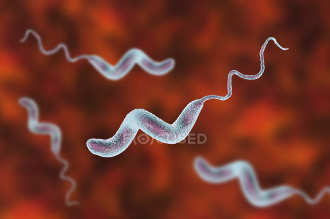 Diareea cu Campylobacter