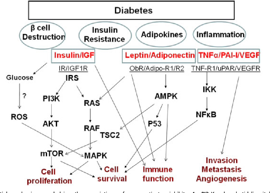 pancreatic cancer diabetes)
