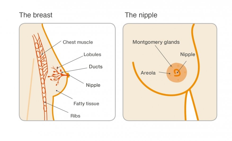 papilloma breast surgery recovery time