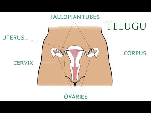 papillomavirus meaning in telugu